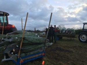 Hemgård juletræ økologisk landbrug hemgaard Østjylland østjylland Mariager